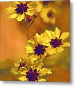 Golden Coreopsis Wildflowers  Metal Print