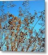 Golden Crepe Myrtle Seeds Metal Print
