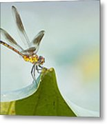 Golden Dragonfly On Water Lily Leaf Metal Print