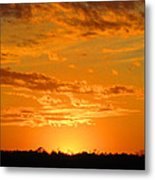 Golden Evening Metal Print