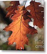 Golden Fall Leave's Close Up Metal Print