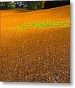 Golden Field Metal Print by Luba Citrin