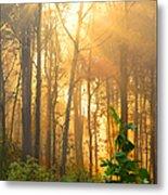 Golden Fog Thru The Trees Metal Print