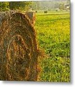 Golden Hay Field Metal Print