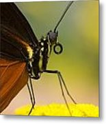 Golden Helicon On Flower Metal Print