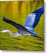 Golden Heron Metal Print