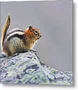 Golden-mantled Ground-squirrel Metal Print