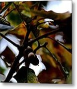 Golden Oak At Nightfall Metal Print