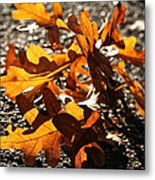 Golden Oak Shadows Metal Print