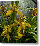 Golden Orchid Metal Print