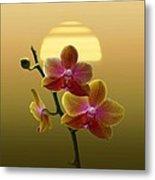 Golden Orchid Sunset Metal Print