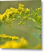 Golden Perch Metal Print