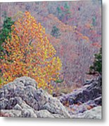 Golden Poplar Among The Rocks At Johnsons Shut Ins State Park Metal Print