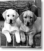 Golden Retriever Pups Metal Print