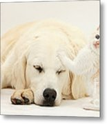 Golden Retriever With Two Kittens Metal Print