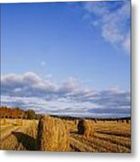 Golden Rolls Of Hay In A Field Metal Print
