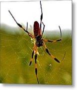 Golden Silk Spider Metal Print