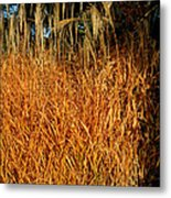 Golden Silver Grass Metal Print