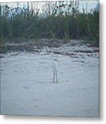 Golden Slipper Egret Sea Oats Metal Print