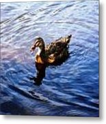Golden Star Duck Metal Print by Joan Meyland