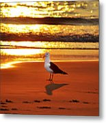 Golden Sunrise Seagull Metal Print