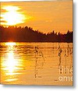 Golden Sunsset Metal Print
