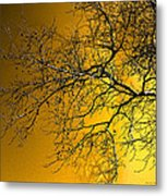 Golden Walnut Tree Metal Print