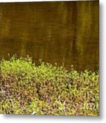 Golden Water's Edge Metal Print