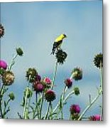 Goldfinches On Thistles Metal Print