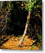 Golds Into The Natural Tunnel Metal Print
