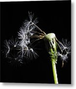 Gone With The Wind Metal Print