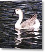 Goose And Lake Metal Print