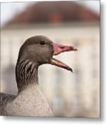 Goose At Nymphenburg Palace Metal Print by Andrew  Michael