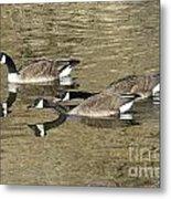 Goose Giving A Warning Metal Print