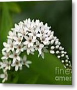 Gooseneck Flowers And Buds Metal Print