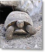 Gopher Tortoise Metal Print