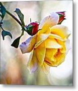 Gorgeous Roses Metal Print