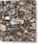 Gossamer-winged Butterfly Metal Print