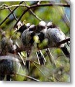 Gossip Birds Metal Print