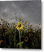 Goth Sunflower Metal Print