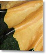 Gourd Green Orange Macro 1 Metal Print