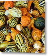 Gourdgeous Metal Print by Kevin Fortier