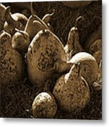 Gourds In Sepia Metal Print