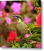 Graceful Honeyeater Metal Print
