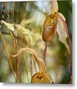 Graceful Orchids Metal Print
