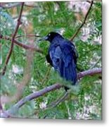 Grackle On A Branch Metal Print