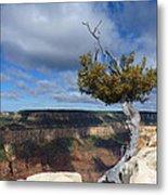 Grand Canyon Struggling Tree Metal Print