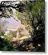 Grand Canyon Through Trees Metal Print