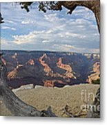 Grand Canyon Tree Metal Print