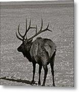 Grand Dad Elk Metal Print